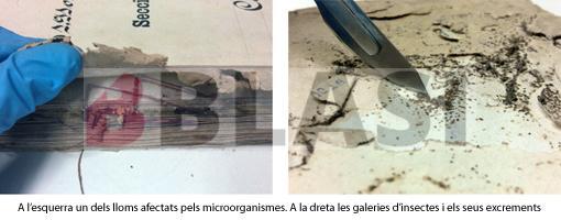 Detall de l'afectació per microorganismes en el cosit de l'expedient i de les galeries de corcs i els seus excrements